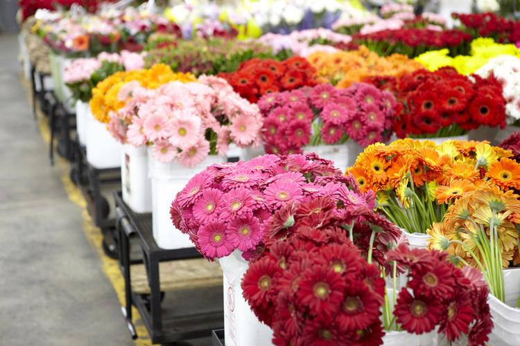 عکس بازار گل و گیاه همدانیان