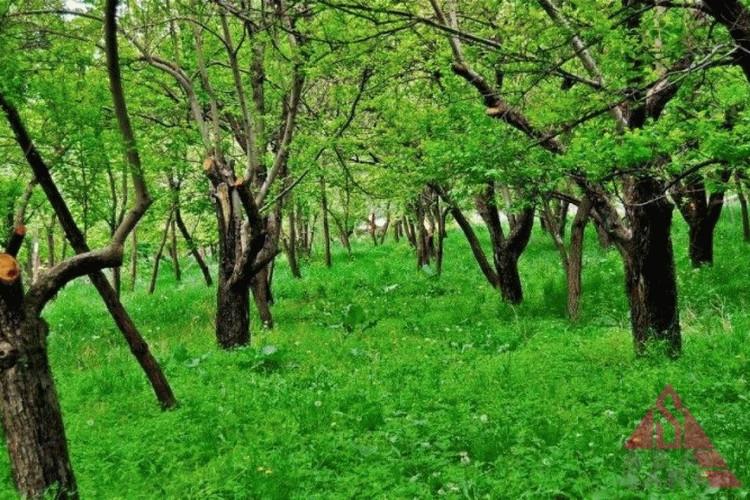 عکس روستای عنبران مشهد