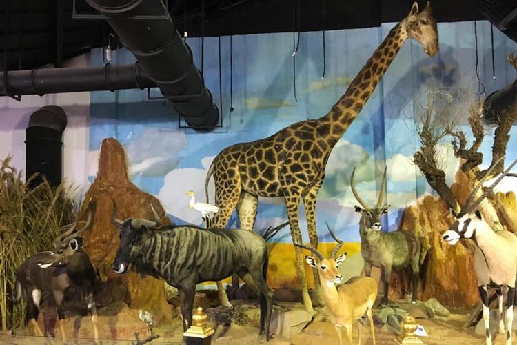 عکس موزه حیات وحش