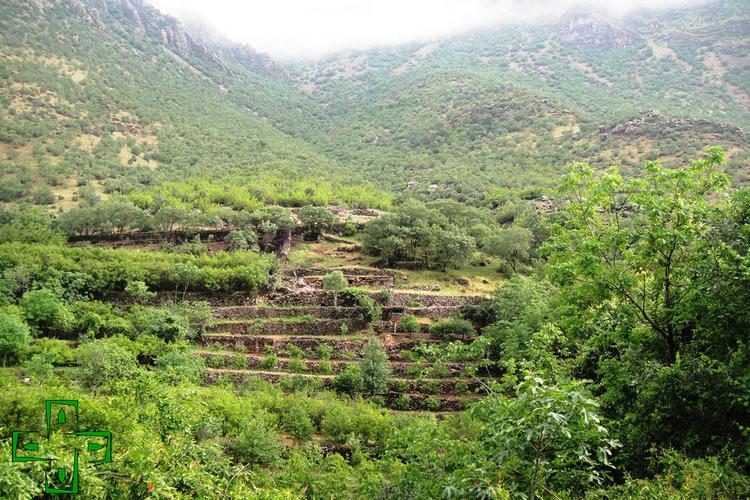 عکس روستای داریان کرمانشاه